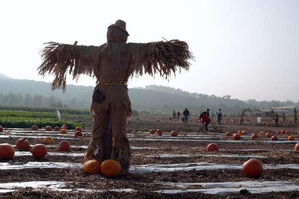 Scarecrow2-m